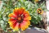 Desert Wild Flower